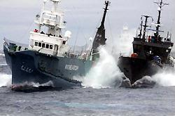 Sea_shepherd_again_jpeg_2